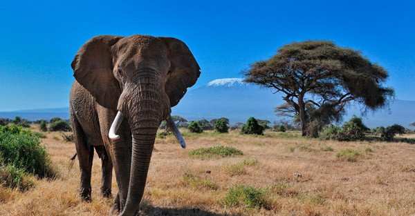 Destination Spotlight-Kenya